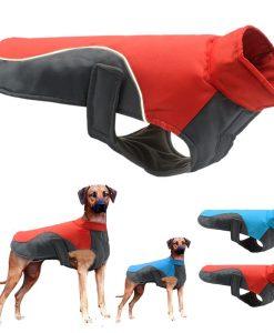 מעיל לכלבים